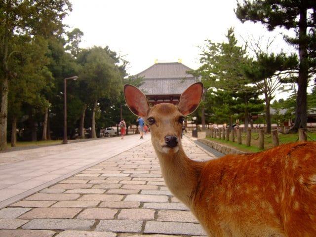奈良公園の鹿がインバウンドで人気