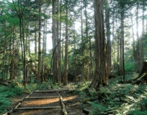 ユニークな観光地域づくり事例2:長野県 赤沢自然休養林での森林セラピーを活かした観光地域づくり