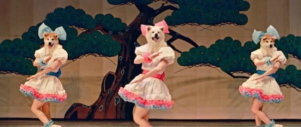 秋田犬アイドルグループ「MOFUMOFU ☆DOGS 」ミュージックビデオ/一般社団法人秋田犬ツーリズムより