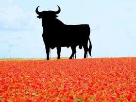 訪日スペイン人観光客のインバウンドデータ