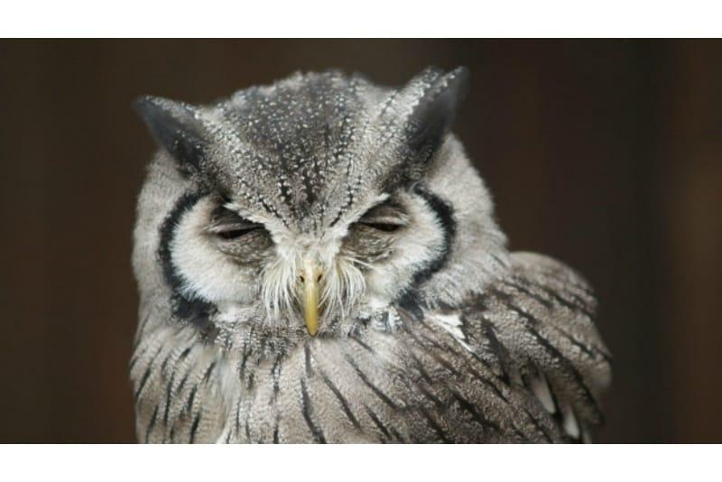 インバウンド人気観光地ランキング2位「アキバフクロウ」の人気の理由・インバウンド対策とは