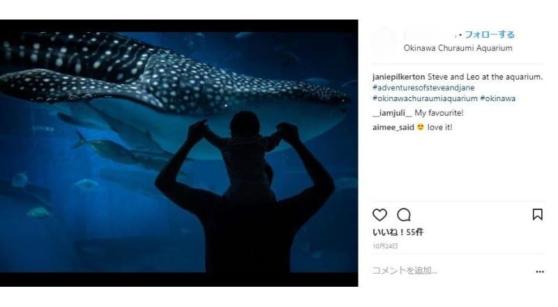 ジンベイザメを撮影する訪日外国人が多数