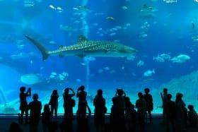 インバウンド人気観光地ランキング18位「沖縄美ら海水族館」の人気の理由・インバウンド対策とは