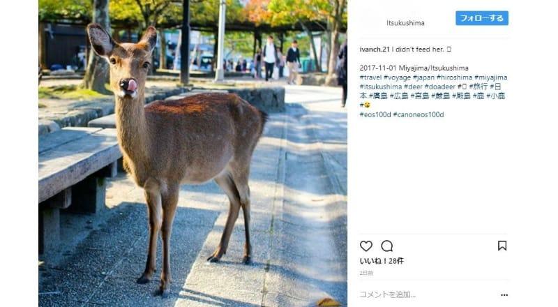 付近の鹿や紅葉も人気の撮影スポットに