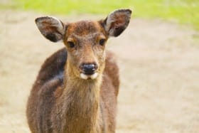インバウンド人気観光地ランキング11位「奈良公園」の人気の理由・インバウンド対策とは
