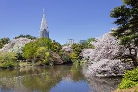 インバウンド人気観光地ランキング7位「新宿御苑」の人気の理由・インバウンド対策とは
